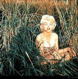 Marilyn Monroe As model for Earl Moran Foto 274 (Мэрилин Монро В качестве модели для графа Моран Фото 274)
