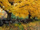 Wallpaperi Th_13287_A_Golden_Season_in_New_England_122_985lo